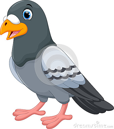 pigeon-cartoon-isolated-white-background-vector-illustration-69393311